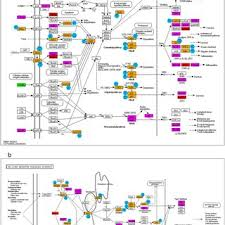 enrichment of kegg pathways for the dengue virus interacting human