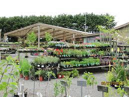 plants mad river gardens