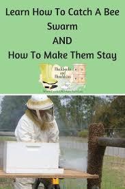 best 25 swarm of bees ideas on pinterest honey bee keeping