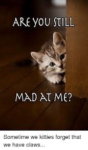 You Still Mad Meme - are you still mad at me sometime we kitties forget that we have