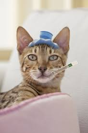 Bed Bugs On Cats To Control Fleas Learn The Flea Life Cycle