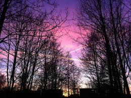 black trees longing for purple by reaperinc on deviantart