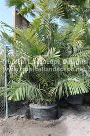 tropical landscaping designs of ta bay