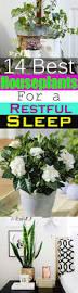 14 best houseplants for a restful sleep balcony garden web