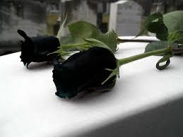 رسائل الورود تحبون images?q=tbn:ANd9GcT