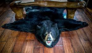 Taxidermy Bear Rug Northern Taxidermy Rugs