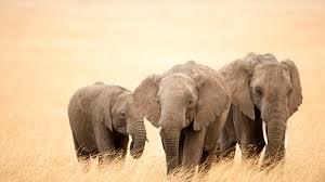desktop elephant cartoon pictures