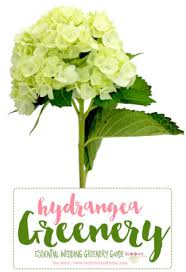wedding flowers greenery the essential guide to greenery for weddings green flower names