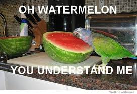 Watermelon Meme - oh watermelon you understand me weknowmemes