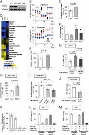 mafs floor plan molecular chaperone trap1 regulates a metabolic switch between