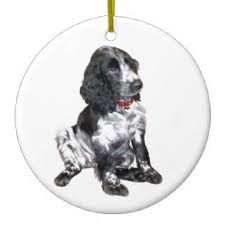 springer spaniel ornaments keepsake ornaments zazzle