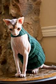 sweaters for cats bean sphynx sweater