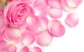 vintage rose wallpaper pink hd desktop wallpapers 4k hd