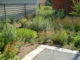 long island native plant initiative rain garden wikipedia