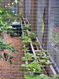 make a critter proof garden greenhouse hometalk