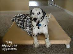 Pvc Pipe Dog Bed Build A Dog Bed With One Of These Easy Plans