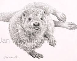 original otter art original graphite pencil drawing on a3 paper