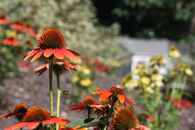 why native plants native plant landscaping bedford johnstown huntingdon state