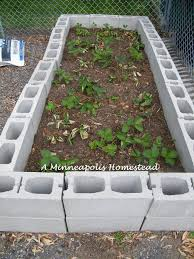 Strawberry Bed Strawberries In Raised Beds Building Raised Garden Beds For