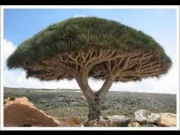 most unique trees of the world