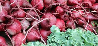 Fall Vegetable Garden Plants by Vegetable Plants That Thrive In The Fall Homestead Gardens Inc