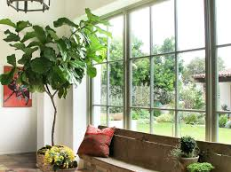 indoor wall plants mediterranean entry to clearly chris barrett