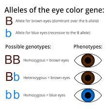population genetics biology visionlearning