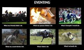 Meme Horse - hilarious eventing meme horses chagne