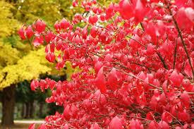 beautiful plants invasive plants photos beware the beautiful plants