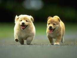 Dog Wallpapers Fine Dog Photos And Pictures Dog Hdq Wallpapers