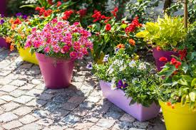 potted plants for myrtle beach oceanfront condos