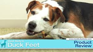 duck feet dog treats youtube