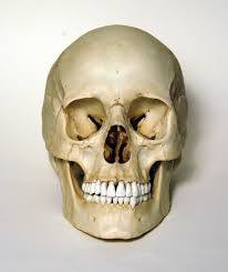 pictures can i get pictures of human skeleton human anatomy