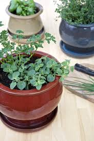 indoor spice garden tips for a small space kitchen herb garden kitchn