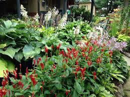 native michigan plants 137 best native midwestern gardening images on pinterest native