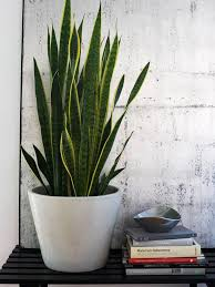 Low Light Indoor Flowers 25 Best Indoor Plant Lights Ideas On Pinterest Indoor Plants