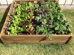 154 best garden design images on pinterest veggie gardens