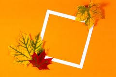 red orange fall leaves background border stock photos images