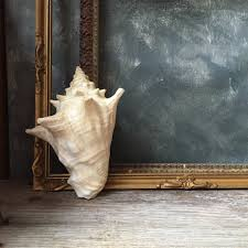 vintage conch shell nautical beach style conch seashell conch