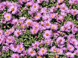 fall blooming flowers 43 best heat resistant plants for spanish gardens images on