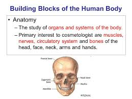 Anatomy And Physiology Study Tools Anatomy And Physiology You Will Learn The Building Blocks Of The