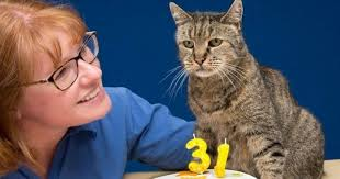 shorthair for 40 year olds feline grandpa nutmeg the tabby cat is 31 years old