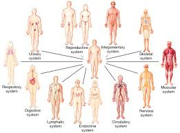 Online Human Body Day 2 Human Body Body Systems And Human Body Systems
