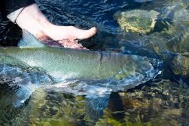backyard buskin u2013 fish and wildlife service news u2013 medium