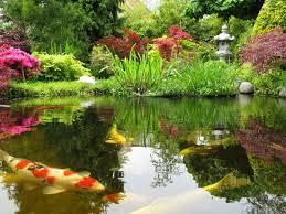 Okeanos Aquascaping Japanese Koi Garden