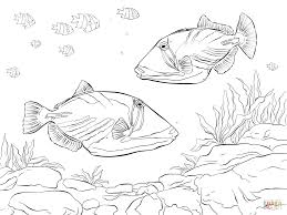 lagoon triggerfish coloring page free printable coloring pages