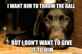 T Dog Meme - 17 adorable problems that drive dogs crazy rover com
