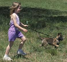 belgian shepherd 4 types belgian malinois history u0026 training temperament