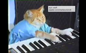 Keyboard Cat Meme - grumpy cat s manager ben lashes reveals what it takes to make it