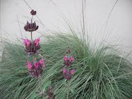 wa native plant society december 2013 u2013 california native plant society blog